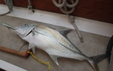 Fish number 2