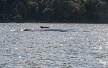 Whales - from our dinghy Prony