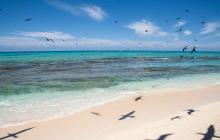 Wreck Reef - Bird Islet